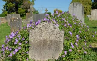 Okeford Fitzpaine churchyard flowers